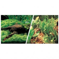 Cenário com plantas