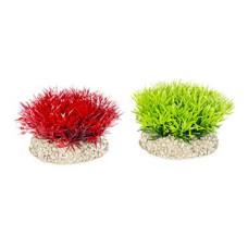 Decoração planta crystalwort moss
